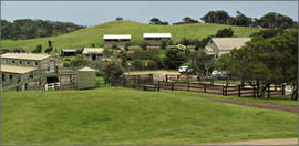 Ace Hi Riding Ranch - Accommodation Directory
