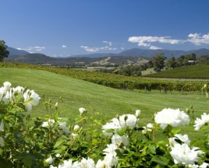 Balgownie Estate Vineyard Resort and Spa - Accommodation Directory