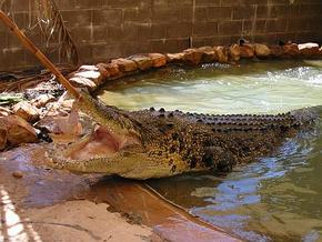 Wyndham Zoological Gardens and Crocodile Park - Accommodation Directory