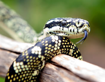 Reptile Encounters - Accommodation Directory
