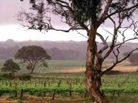 Yangarra Estate Vineyard - Accommodation Directory