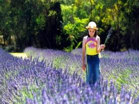 Brayfield Park Lavender Farm - Accommodation Directory