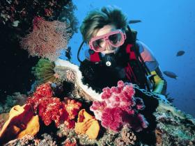 Cook Island Dive Site - Accommodation Directory