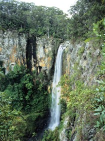 Gondwana Rainforests of Australia - Accommodation Directory