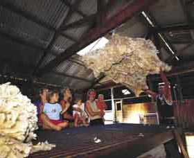 Shear Outback the Australian Shearers Hall of Fame - Accommodation Directory