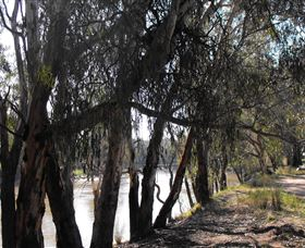 Mia Forest Drives Narrandera - Accommodation Directory
