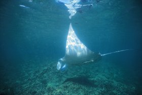 Manta Ray Bay Dive Site - Accommodation Directory