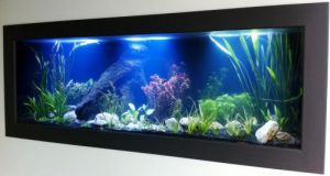 Aquariums in Cairns - Accommodation Directory