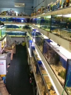 Clearwater Aquariums - Accommodation Directory