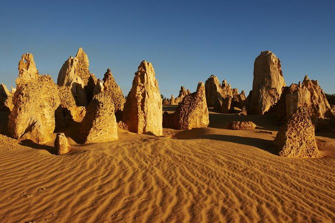 Pinnacles Day Trip from Perth Including Yanchep National Park - Accommodation Directory