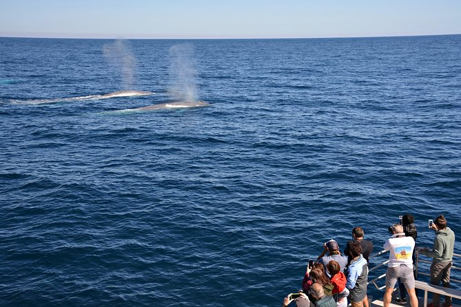 Blue Whale Perth Canyon Expedition - Accommodation Directory