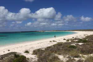 Abrolhos Island Half Day Fly and Flipper - Accommodation Directory