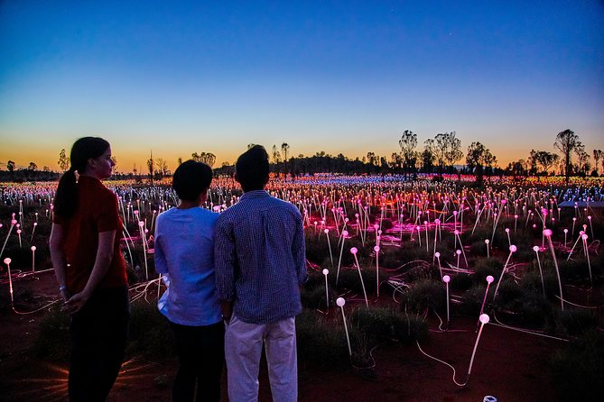 Uluru Field of Light Sunrise Tour - Accommodation Directory