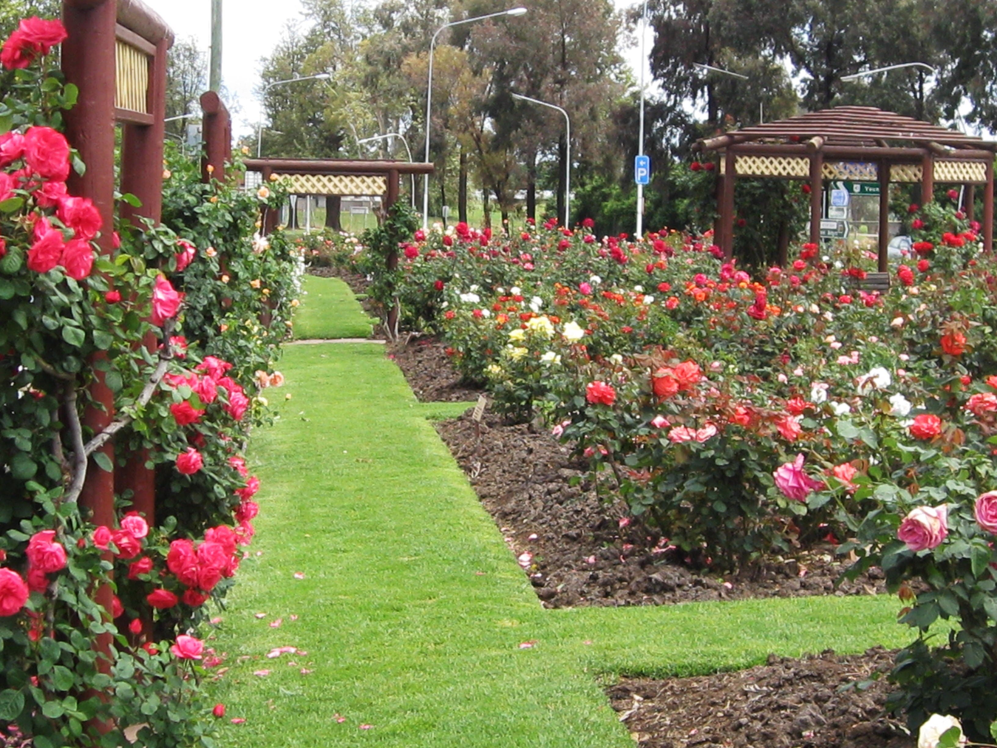 Cowra Rose Garden - Accommodation Directory