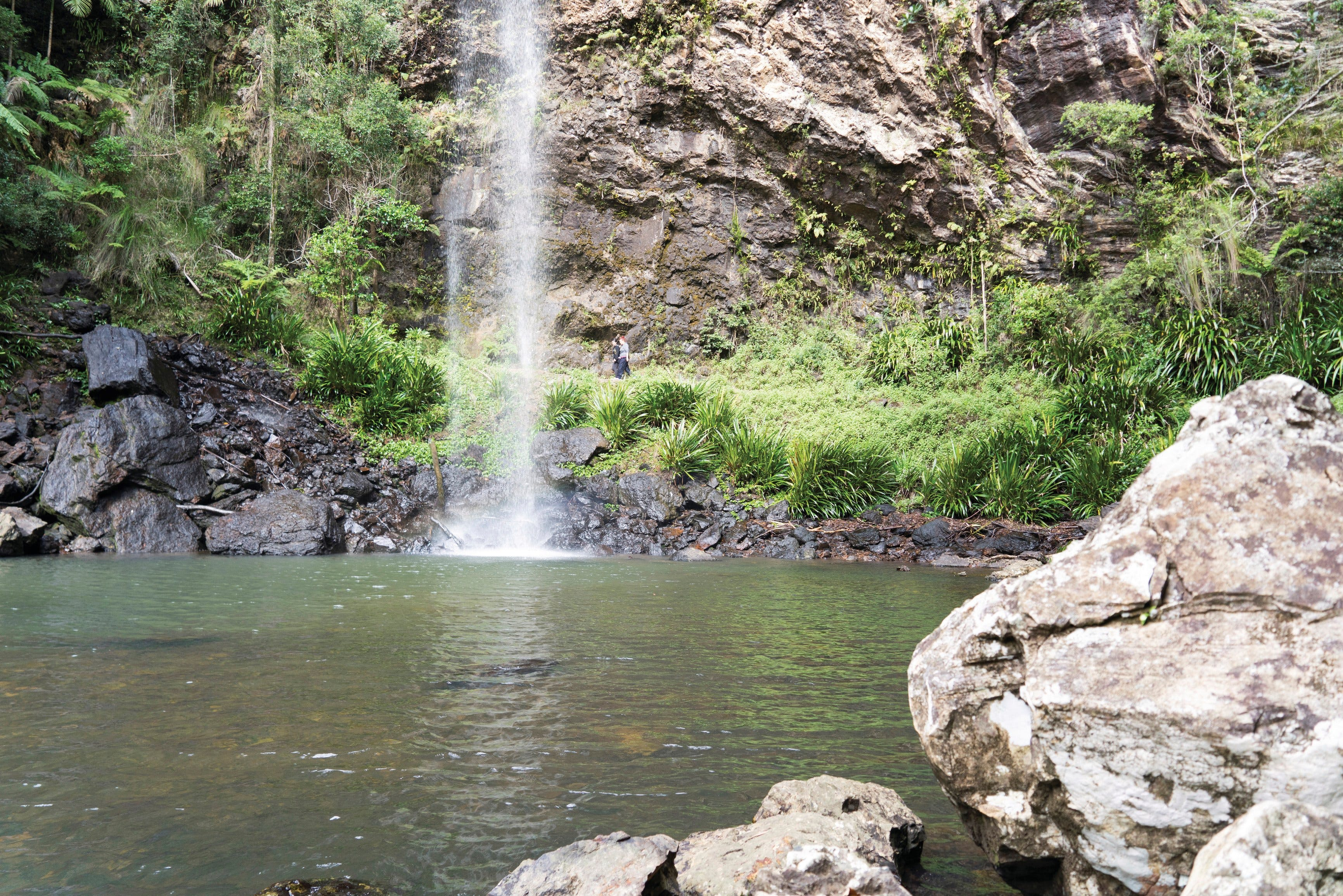 Twin Falls Circuit Springbrook National Park - Accommodation Directory