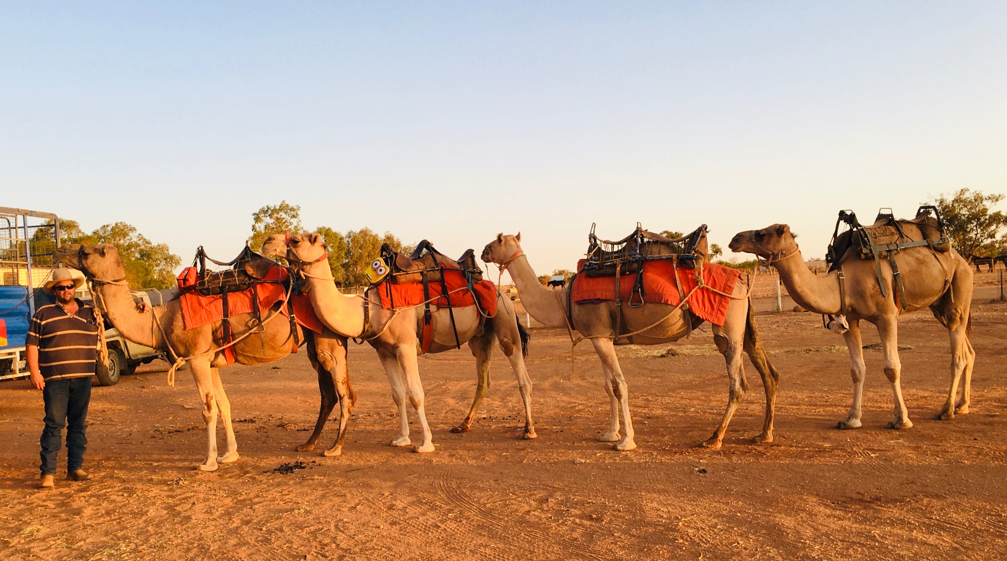 Broken Hill Camels - Accommodation Directory