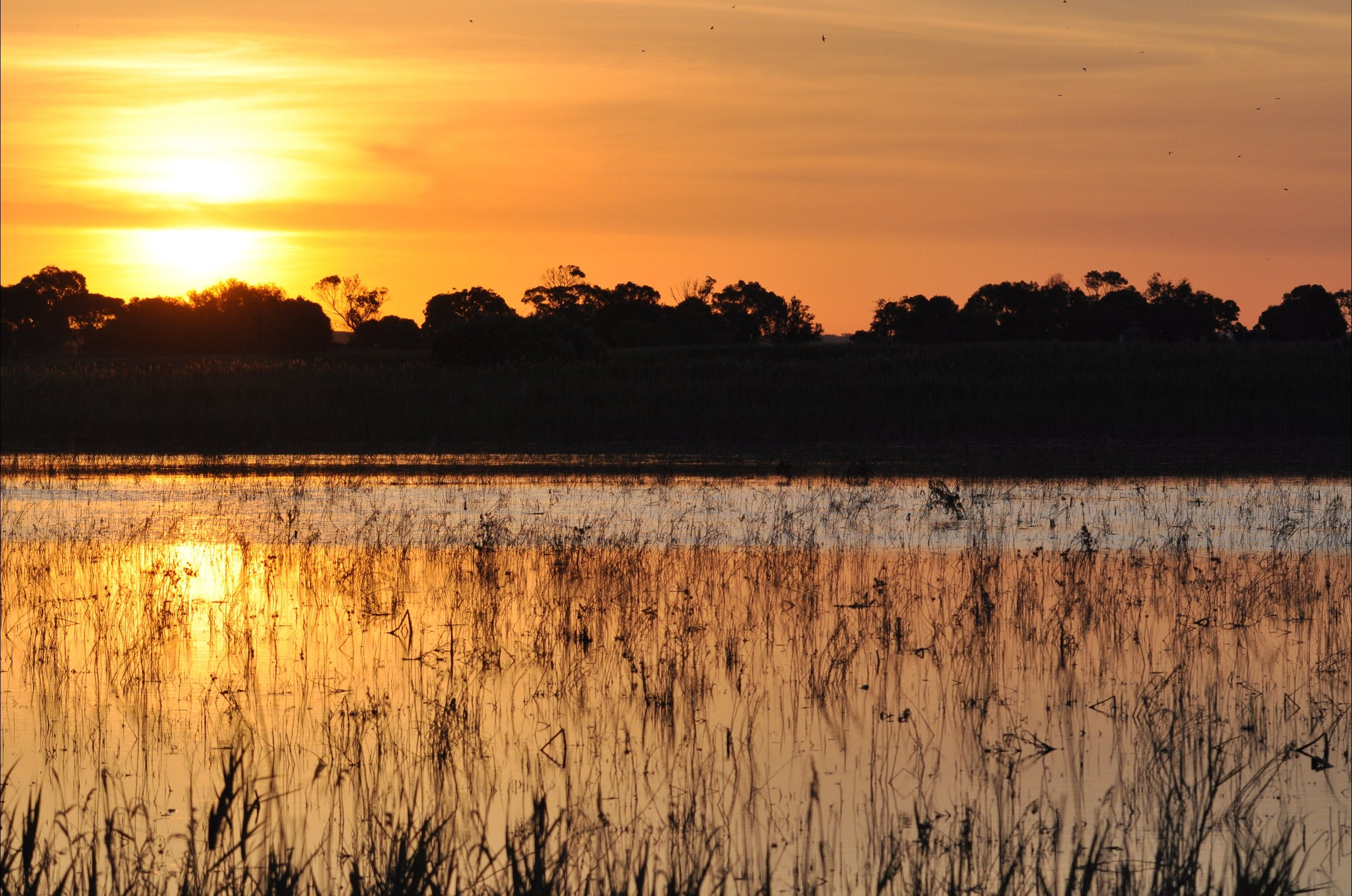 Bool Lagoon Game Reserve and Hacks Lagoon Conservation Park - Accommodation Directory