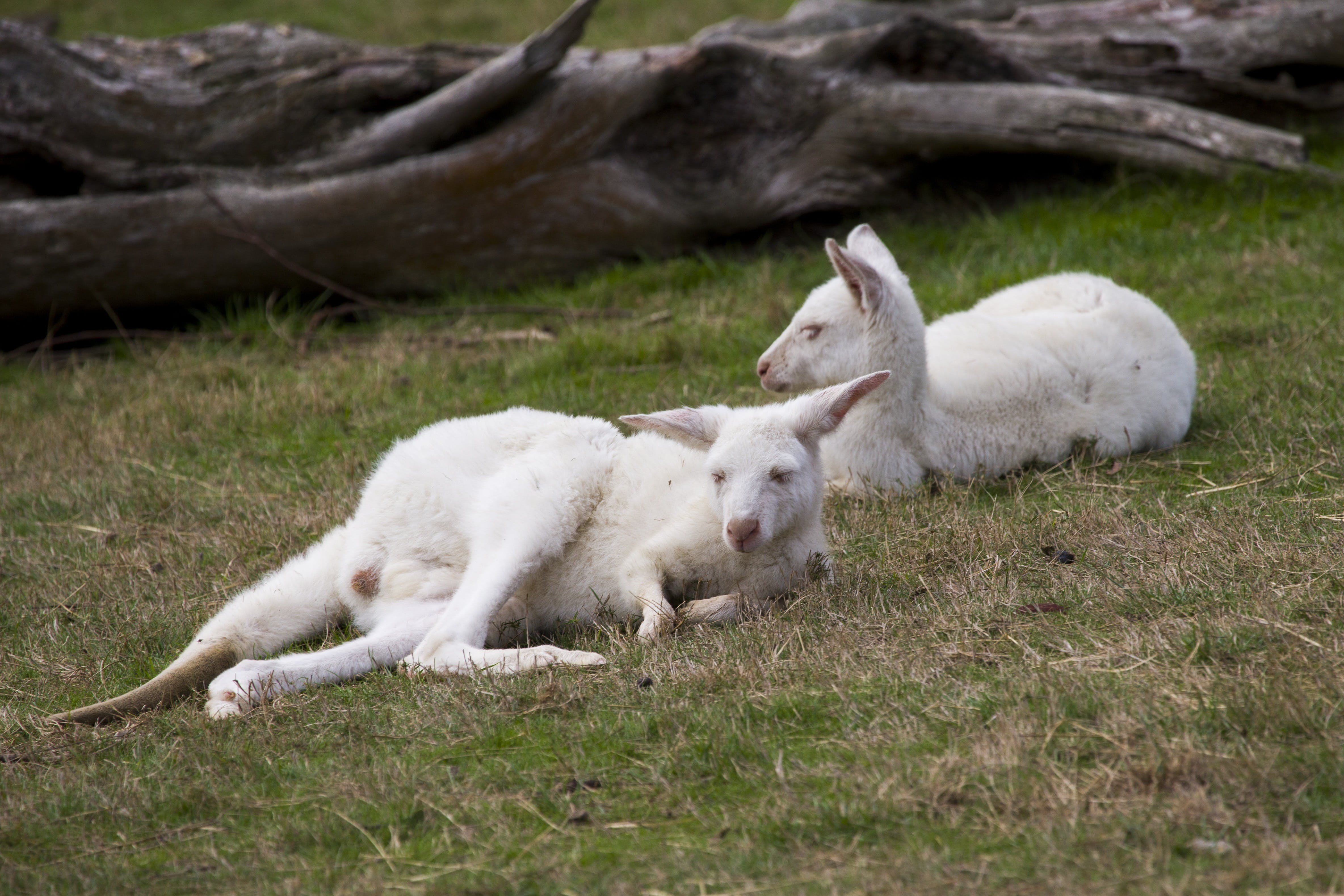 Yarra Valley Nocturnal Zoo - Accommodation Directory