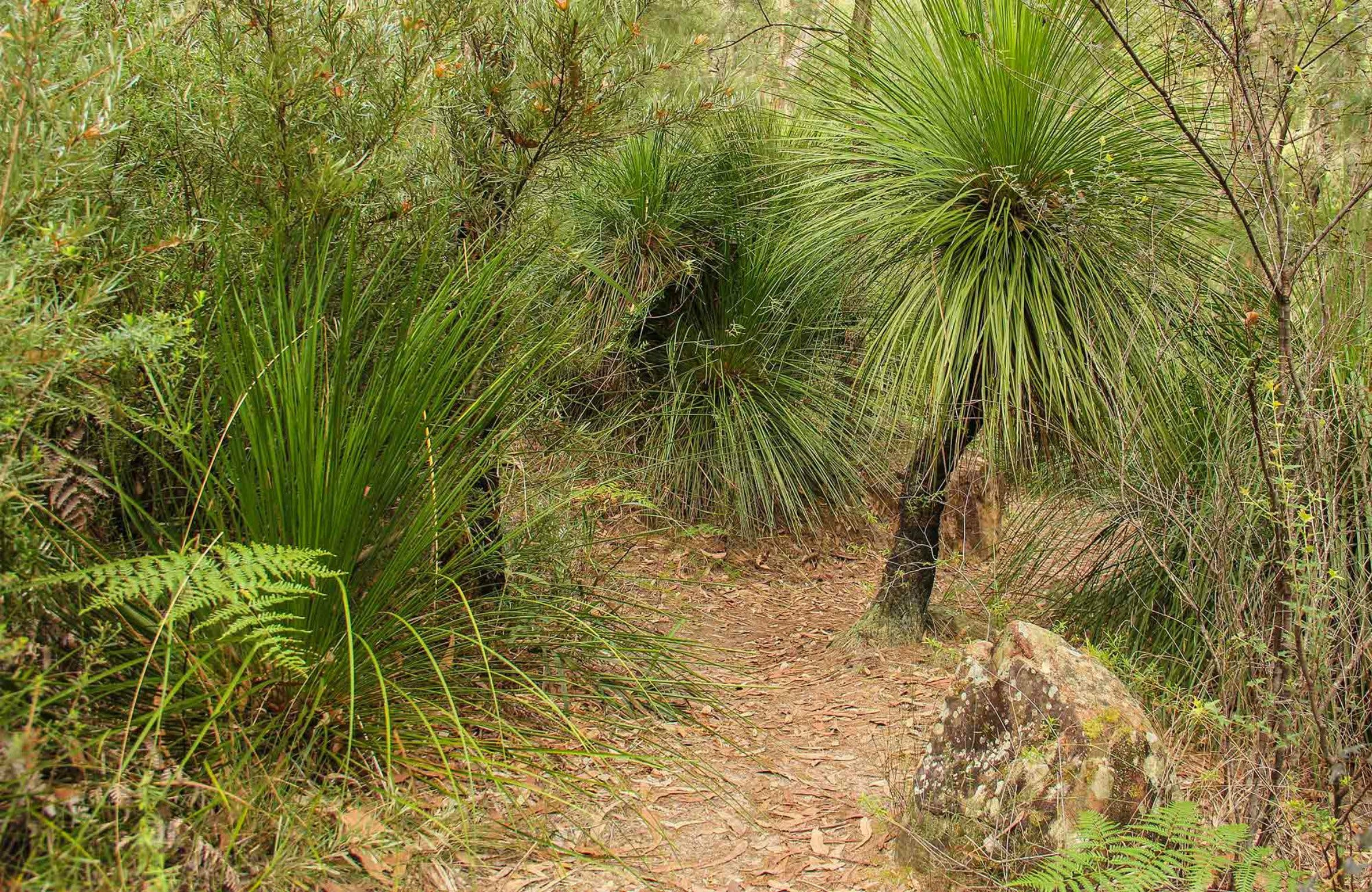 Grass Tree Circuit - Accommodation Directory