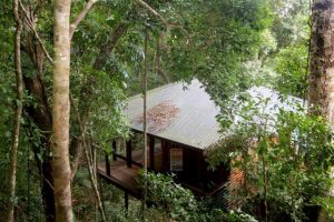 Cairns Reef  Rainforest BB - Accommodation Directory