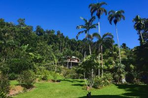 A Daintree Garden - Accommodation Directory