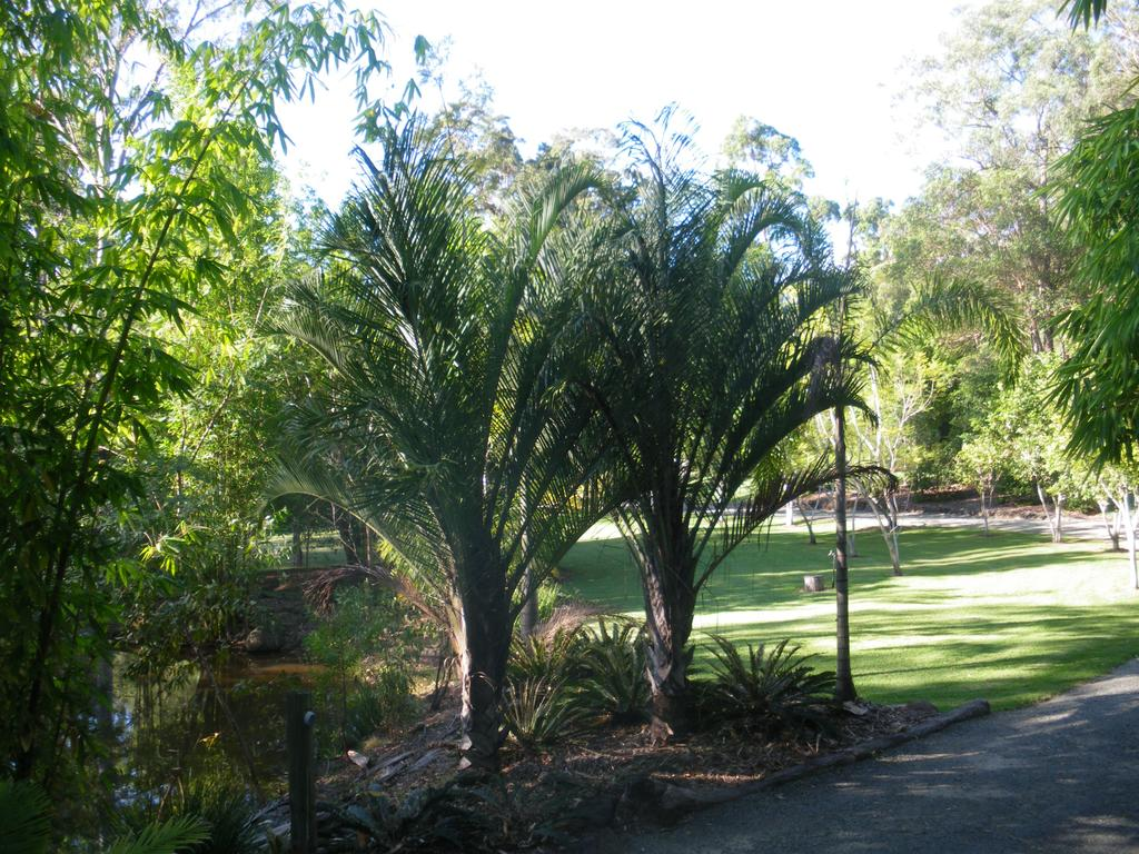 BoBRENE On Tamborine Nude Retreat - Quaint Cottage - Accommodation Directory